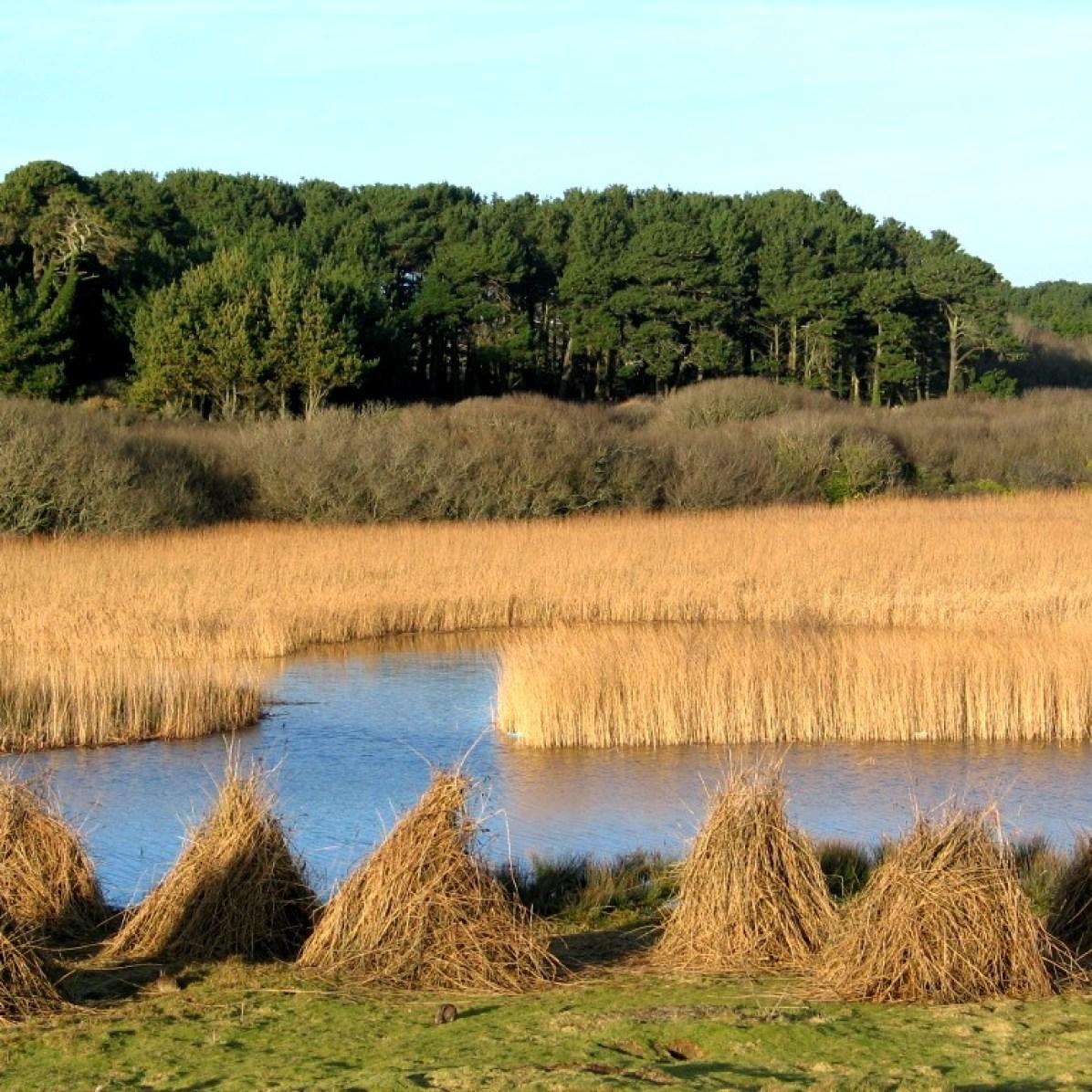 Marazion marsh in January