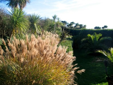 Fading grasses