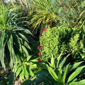 Geraniums and Echiums
