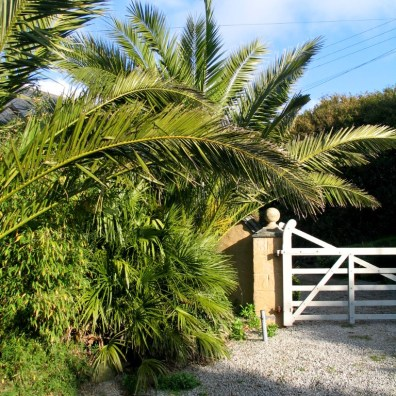 Date palms framing the entrance gate