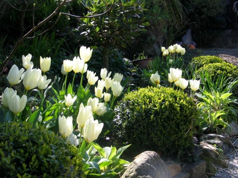 Tulips and box