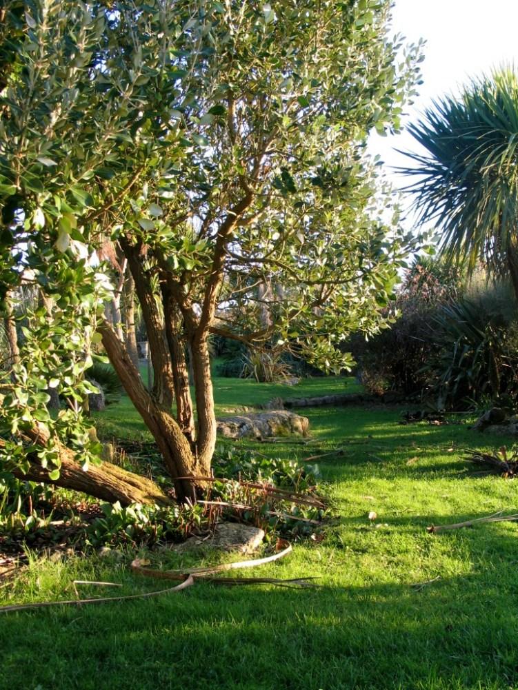 A garden walk