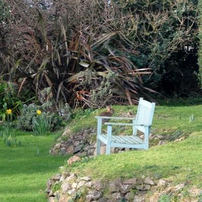 Garden bench and rabbit