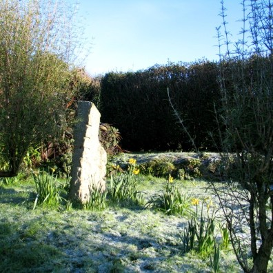 Snow and Daffodils