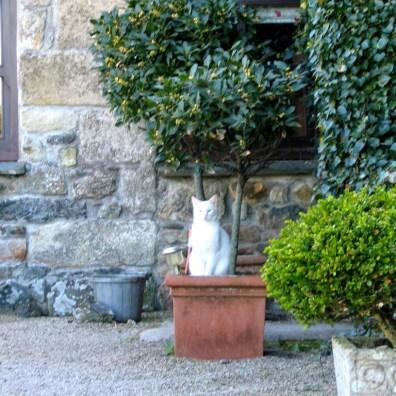 Cat in topiary pot