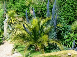 Sub tropical garden in Cornwall