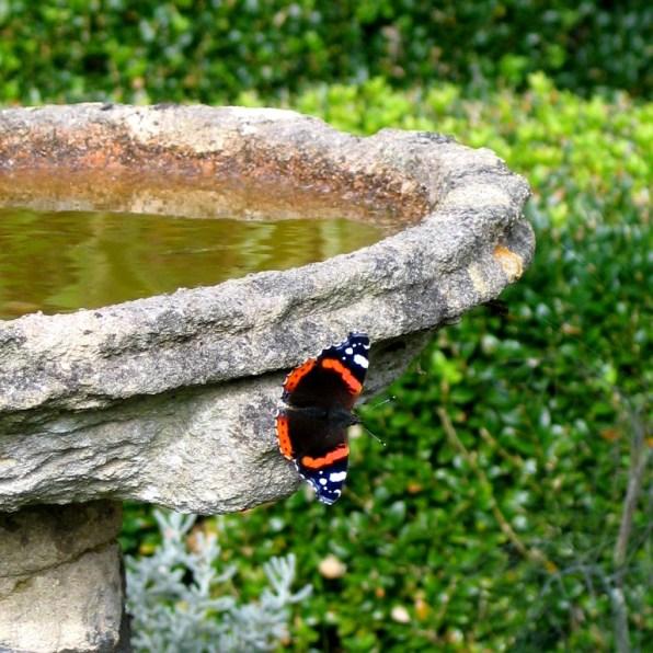 Butterfly on a bird bath