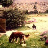 This stable is now the Pink room bathroom mu lurcher Maizie brown with Momma-Cat and Jessica