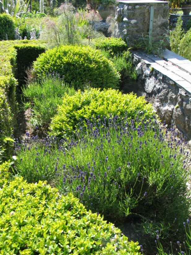 Lavender in the little bed near the sundial
