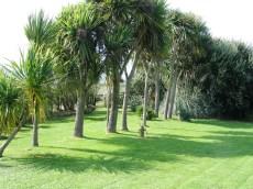 Shadows on a green lawn