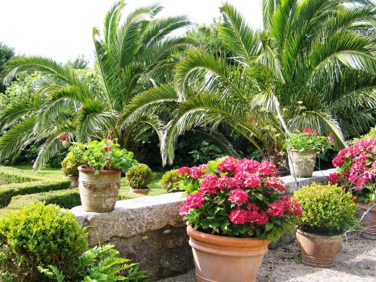 Date Palms and Hydrangeas