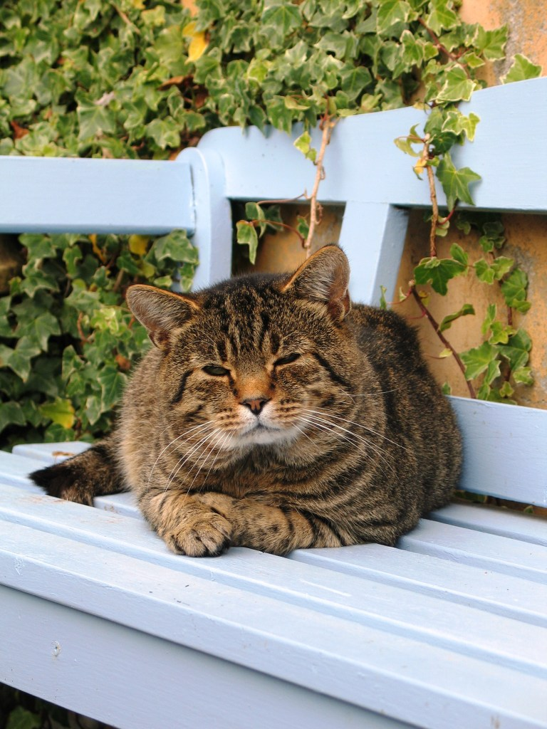 Tabby cat on a blue bench - feral cat