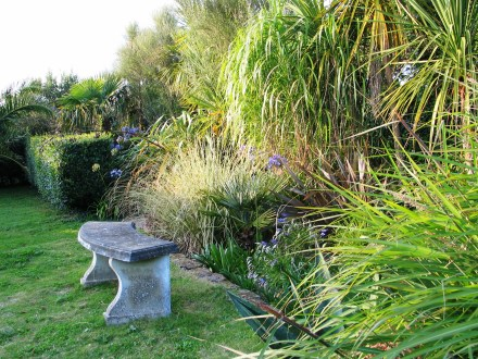 Elephant grass in a cornish garden