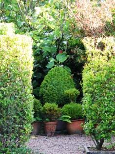 topiary pots