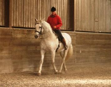 Pre stallion
