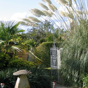 A tall pampas towers over the courtyard entrance at this time of year.The entrance to Ednovean Farm garden