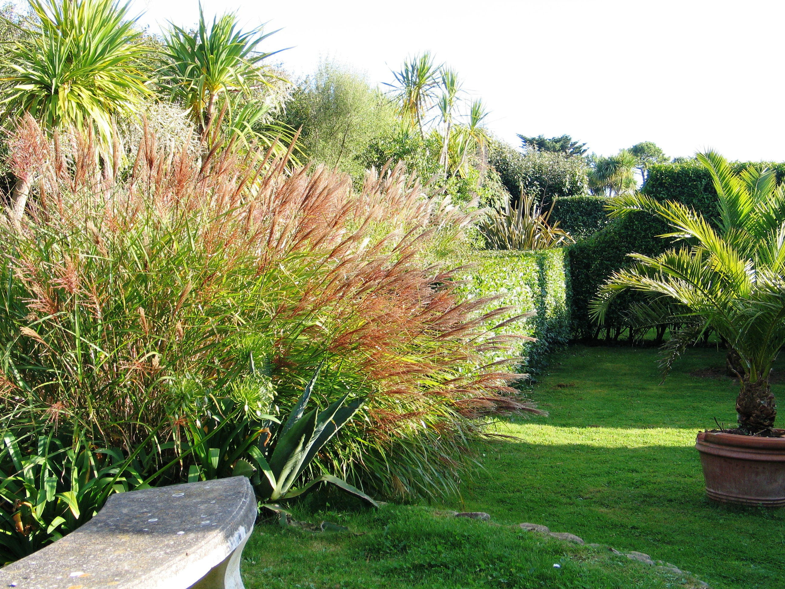 italian garden border with grasses and sub tropical planting in Cornwall