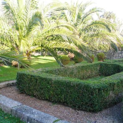 Sub tropical planting of Date Palms at Ednovean Farm