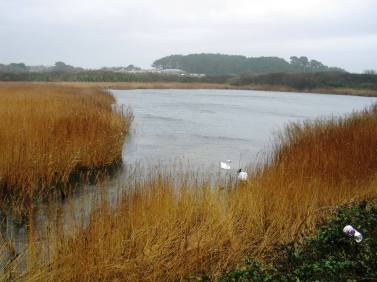 Marazion Marsh - all of the reed in the left were cut down in the spring to conserve the area