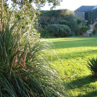 Grasses and grey leafed shrubs frame our lawn