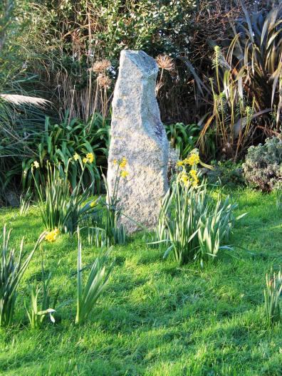 january Daffodils