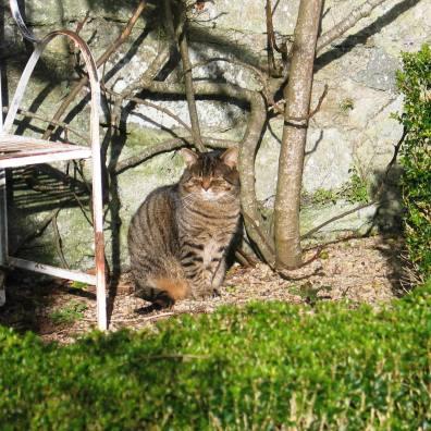 Tabby cat in a formal garden