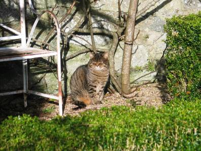 Tabby cat in a formal garden