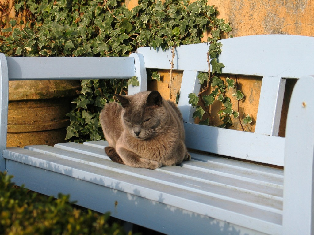 Cat on a blue bench