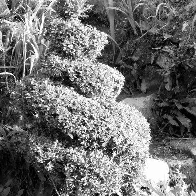I think topiary gives a timeless feel to the garden