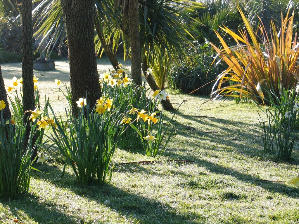 I've celebrated the morning dew on the daffodils throughout March