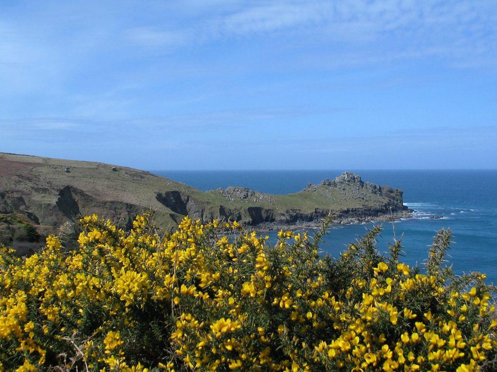 A spring walk to Gurnard's head along an unspoilt coastline