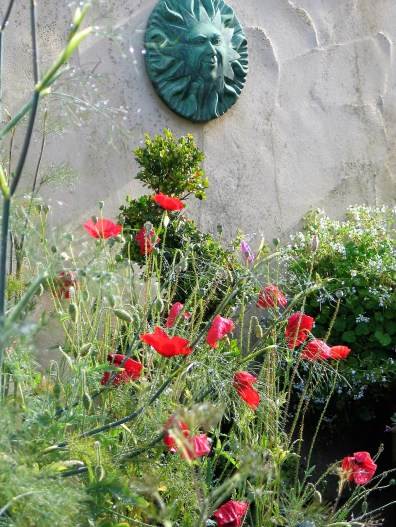 A mix of poppies and topiary give a relaxed air to the formal couryard
