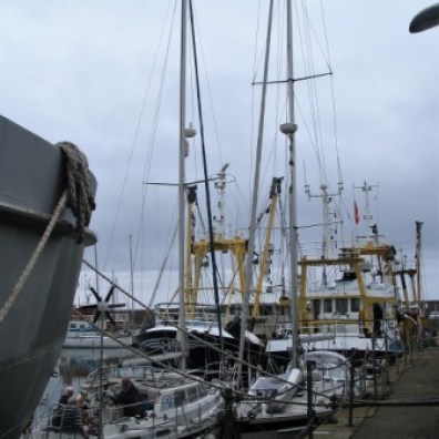 Lofty masts and working boats side by side in penzance harbour