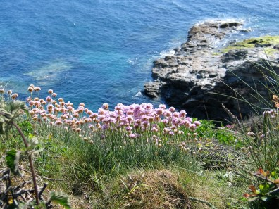 Walking the coastal footpath with wild flowers and blue sea below