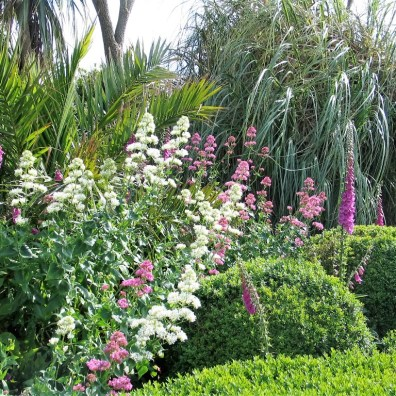 Valerian and foxgloves - wild flowers in a formal garden