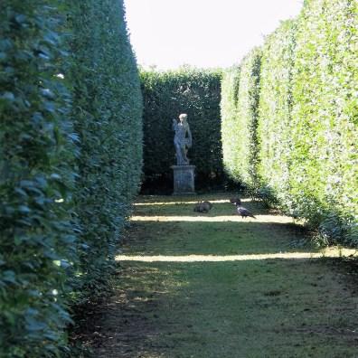 The farmal aisle through the Italian Garden at Ednovean Farm