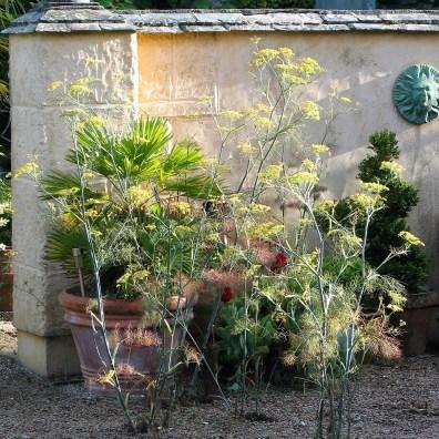 Morning light creeping across a courtyard garden in Cornwall