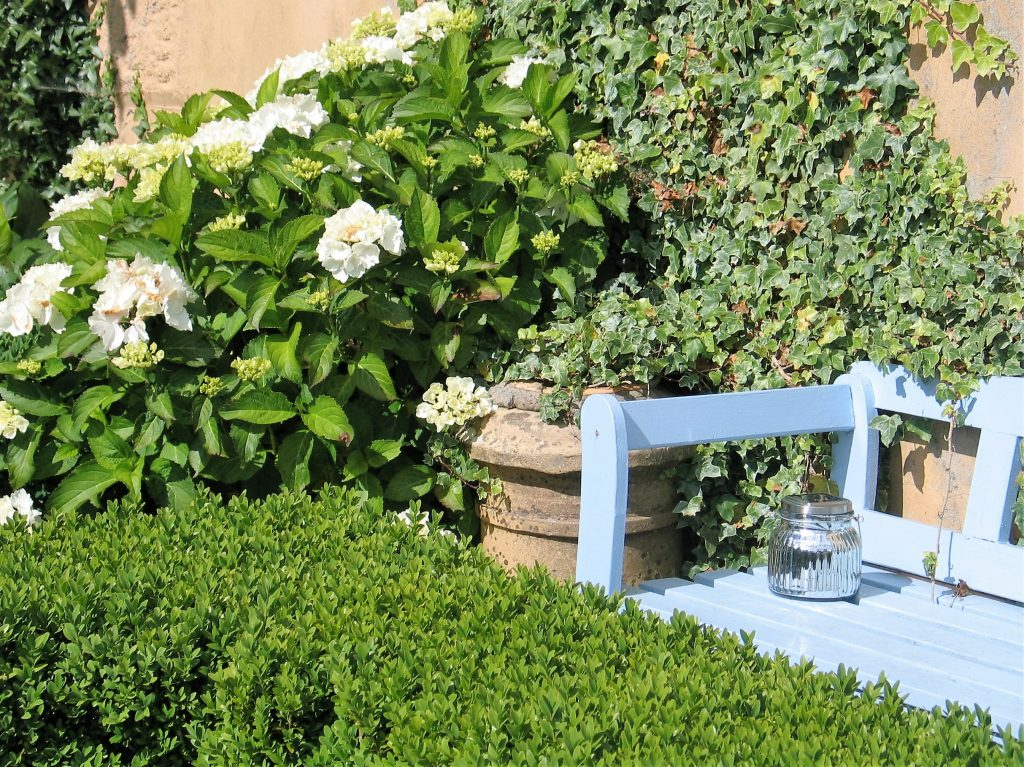 The calming shades of green and white in the garden in a courtyard at Ednovean Farm in July