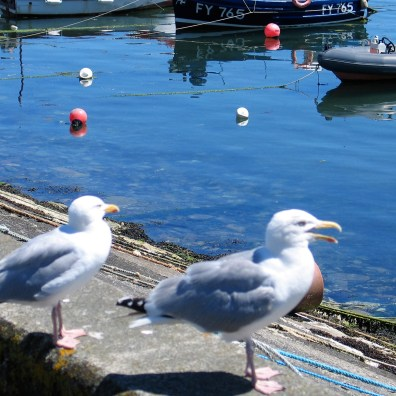 Two sea gull sitting among the lunch time residents overlooking the harbour