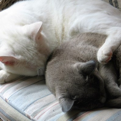 Our cats enjoy a long snooze but there is plenty for humans to do even on a wet day