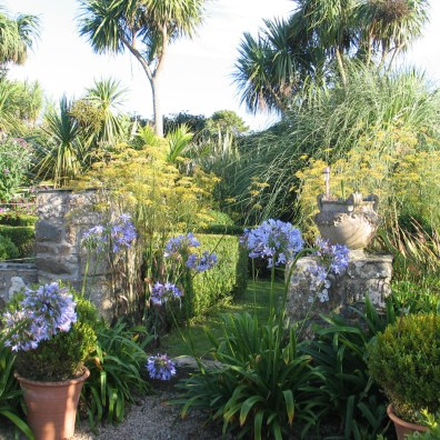 Agpanthus self seeded on teh gravel terrace with formal garden beyond