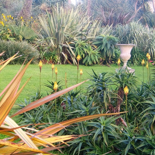 Soft autumn colour in a sub tropical planting in the garden