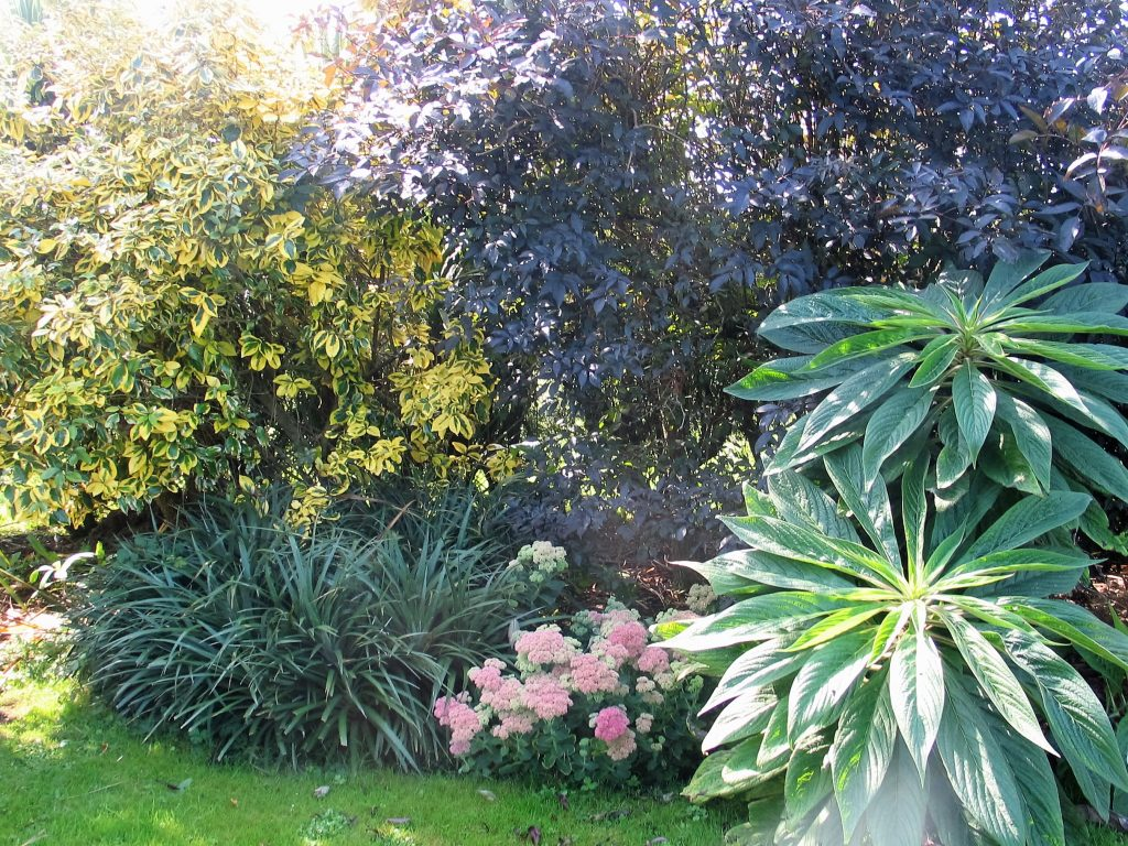 border-planting-september in the garden