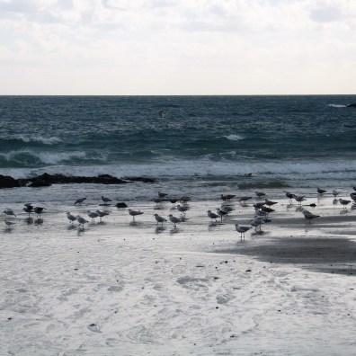 Sea birds on the waters edge