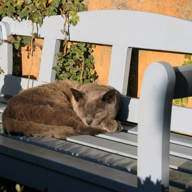 Grey cat enjoying the autumn sunshine on a blue bench
