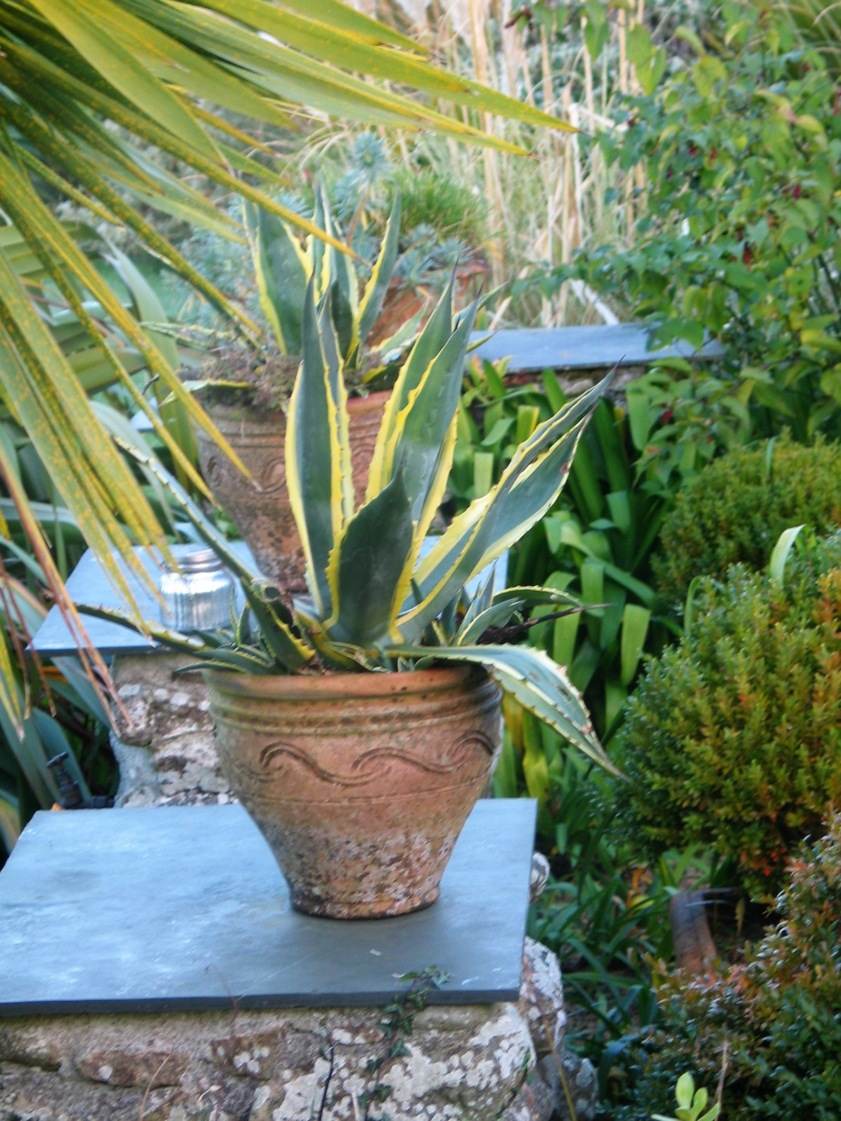Two agaves in terracotta pots framing an entrance