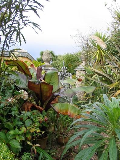 Lush courtyard bananas plants in autumn