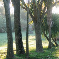 frost beyond the palm trunks