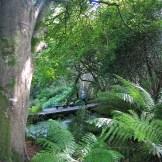 Lush valley trees