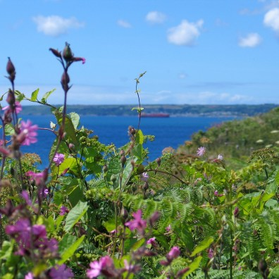 country flowers edge the cliffs